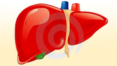 Картинка-анонс к статье Основные симптомы реактивного гепатита