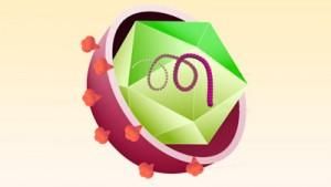 Картинка-анонс к статье Сколько живет вирус гепатита С